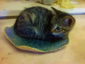 a picture of a kitten lying in a plate